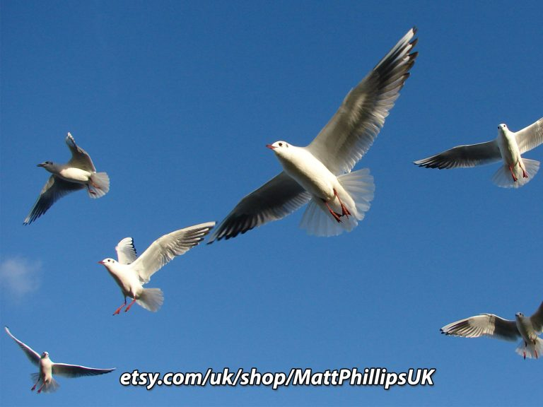 Gulls and Blue Sky